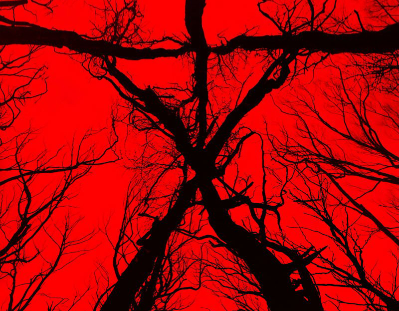 The Blair Witch banner